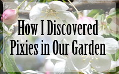 How I Discovered Garden Pixies